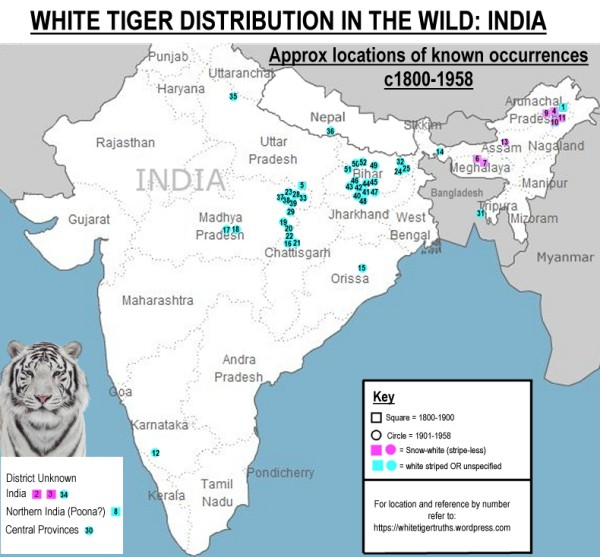 White tiger distribution