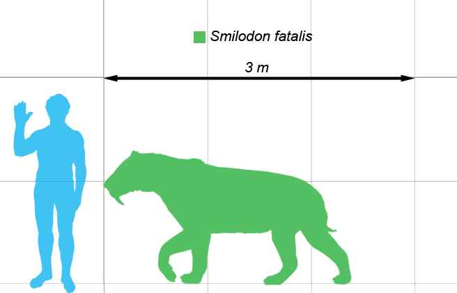 Smilodon, saber cat,Saber toothed tiger,skeleton,enormous teeth,saber teeth