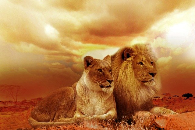 Facts about lions