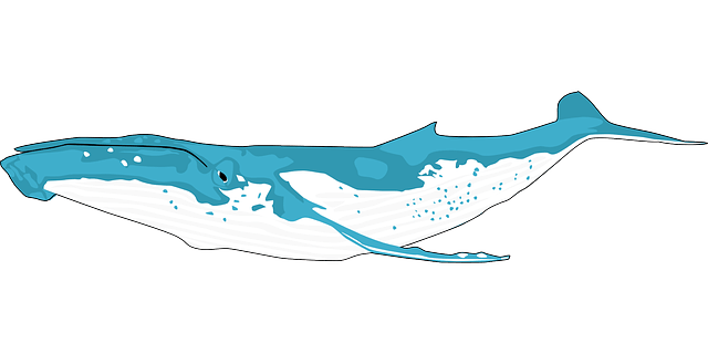 Blue Whale Information
