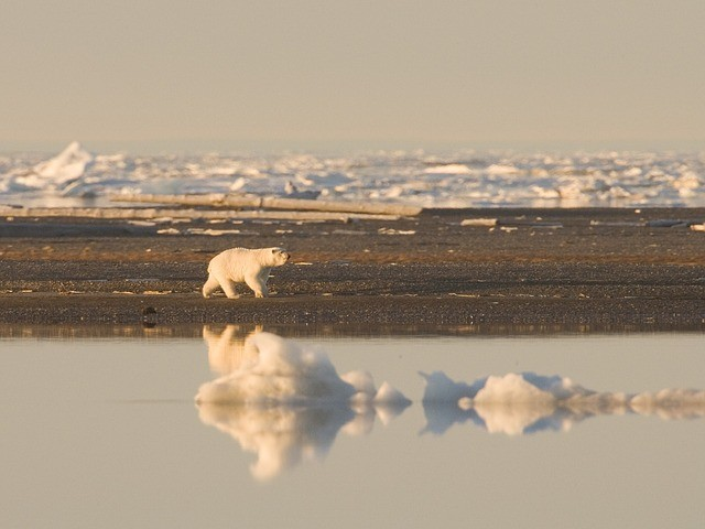 Where Do Polar Bears Live in the arctic