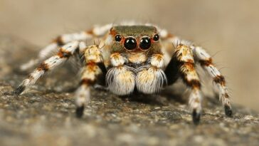 Spider Facts For Kids