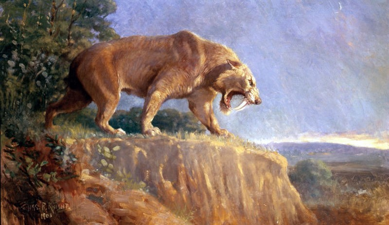 Saber Tooth Cat Information