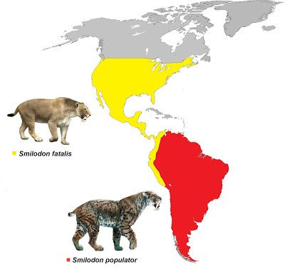 saber tooth cats map