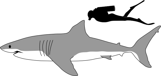 How Big is a Great White Shark