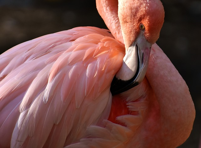 Flamingo Adaptations