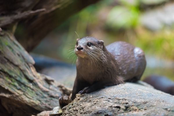All about Sea otter