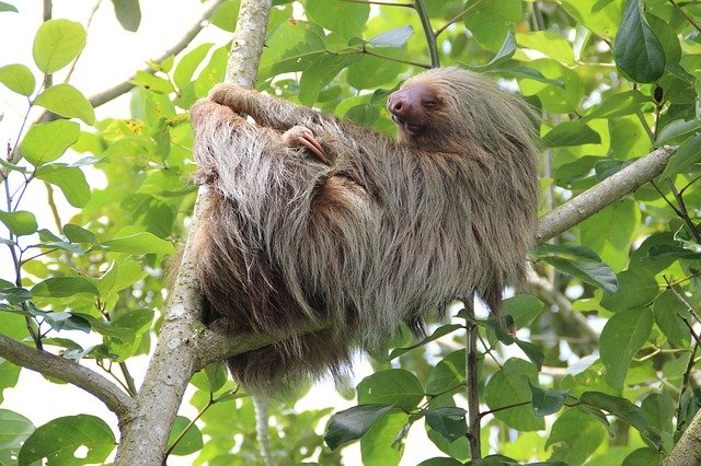 Where Do Sloths Live