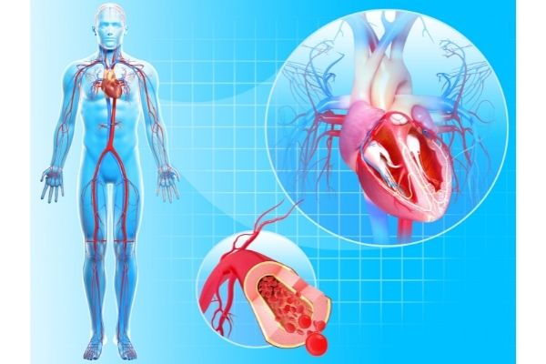 all about Circulatory System