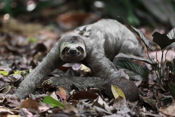 all about sloth