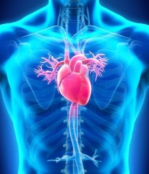 human heart facts for kids