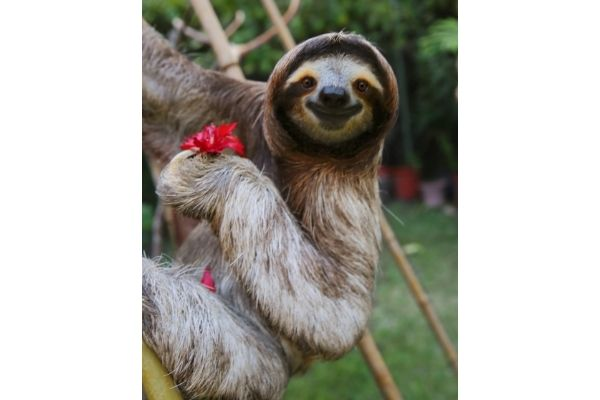 sloth facts about kids