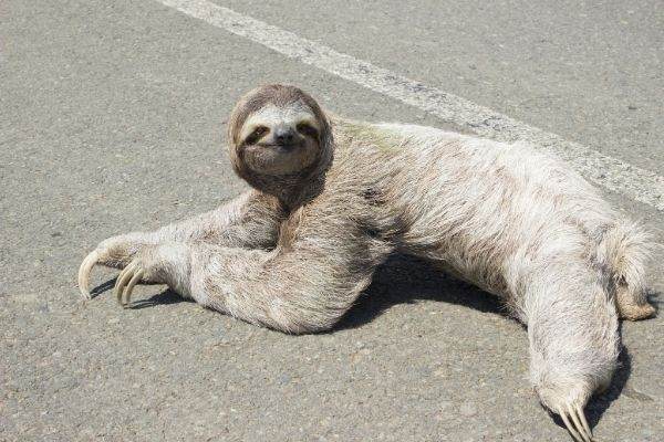 sloth facts for kids
