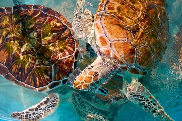 All about Sea turtle