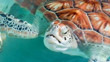 Sea turtle facts for kids