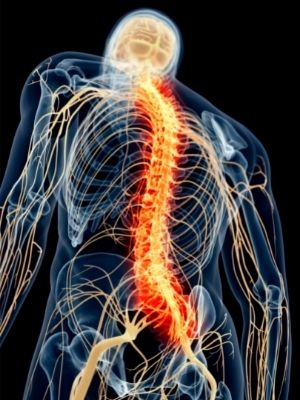 brain and spinal cord facts