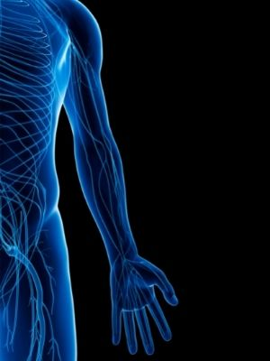 peripheral nervous system facts